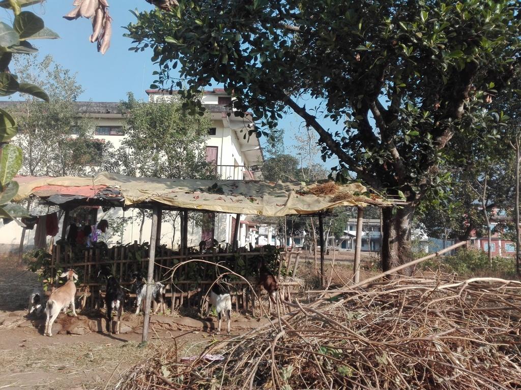 pindeswar campus (3)